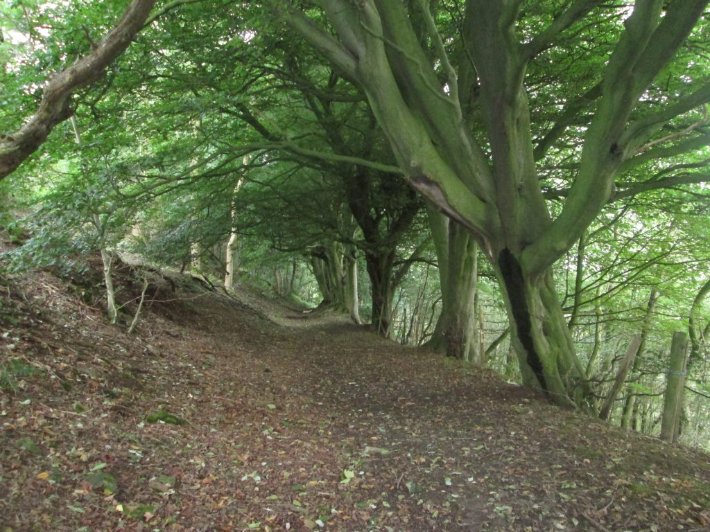 Newton Bank woodland path
