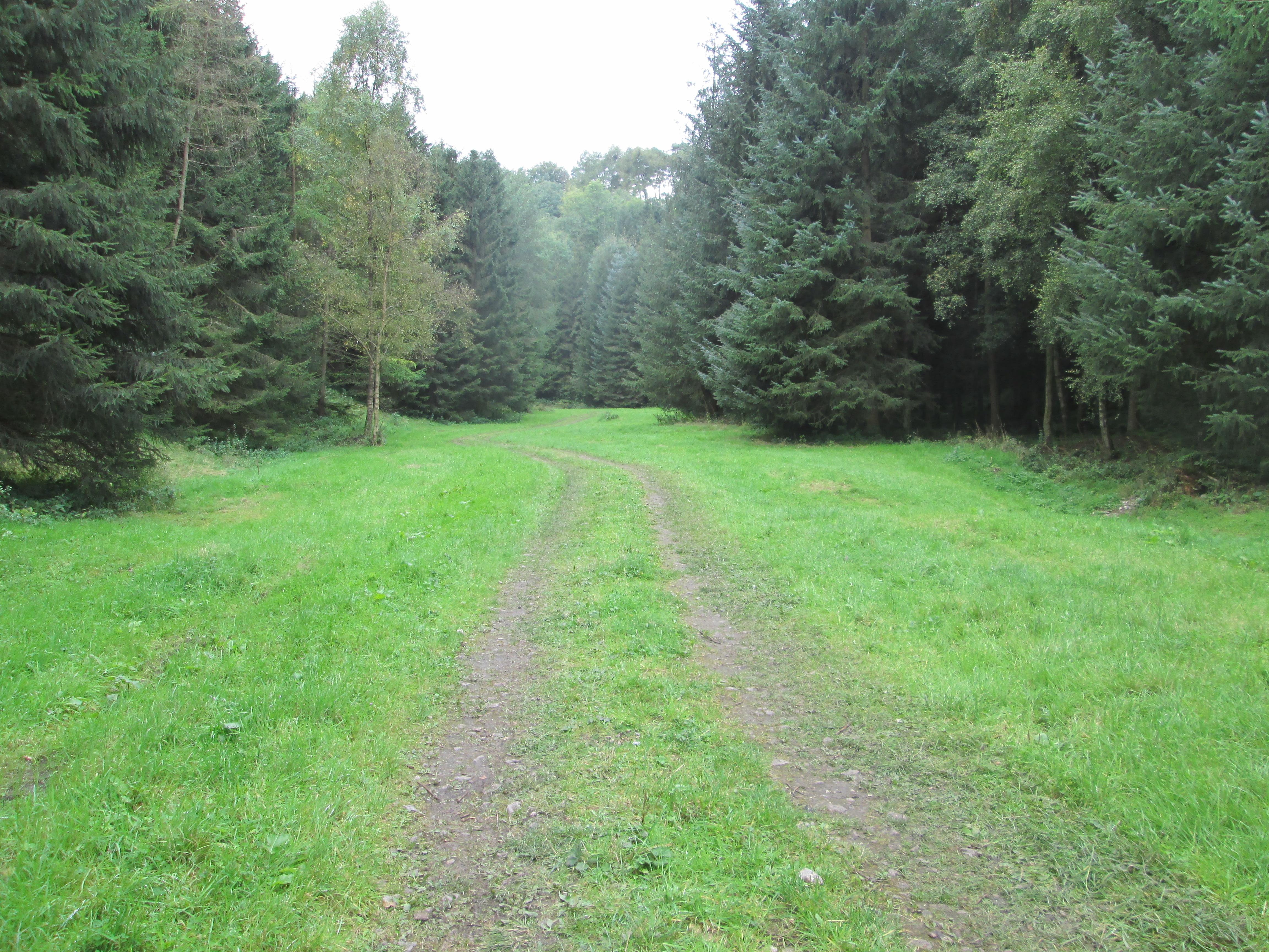 Ash Dale, near Helmsley