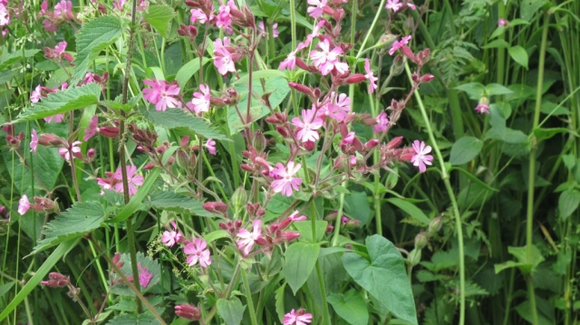 Wild flowers in abundance